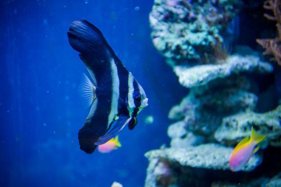 Aquarium im Hotel Das Tyrol